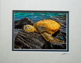 Sheltered life - Turtel Basking on Lava Rock at Kiholo Bay (pale blue & grey double mat)