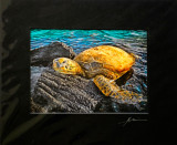 Sheltered life - Turtle Basking on Lava Rock at Kiholo Bay (raven black mat)