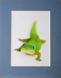 Smiling Gecko - Say Cheese (pale blue grey mat)