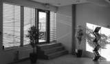 Springlight (iPhone & Lightroom)