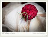 Wedding - Andy & Fiona