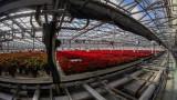 Open House at Van Wingerden Greenhouses