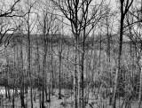P3170001 Dramatic Trees