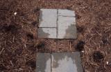 P4150007 Darned Squirrels