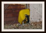 The Yellow Wheelbarrow