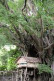 Treehouse, Tanna, Vanuatu