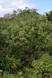 Fijian jungle