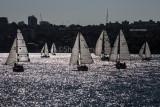 Downwind yacht race on Sydney Harbour