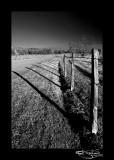 306:366Shadow Land