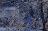 Heavy Frost Detail