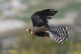Raptors and Vultures