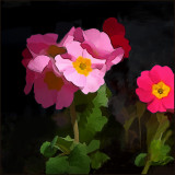 Flora #12