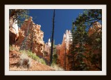 Bryce Canyon National Park Revisited: Chapter 2