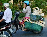 ducks on wheels, My Tho, Vietnam