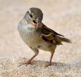 little birdie, Wailea ,Maui, Hawaii
