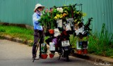 Orchids for sale, Hoi An, Vietnam