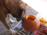 Pumpkin Carving Day
