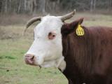 cool horns