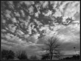 Pretty Sky during Dog Walk