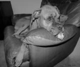 Paisley the Chair Hog