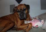 Paisley sleeping on the Pink Blankie