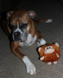 Boy and His Monkey