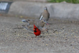 Cardinal stopped by