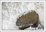 Wave, Rock and Lichen