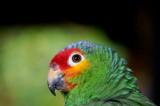 Macaw. Mexico Trip.