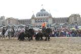 Strand 2012 (891).JPG