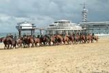 Strand 2011 396.jpg