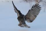 Owl Banding 2013