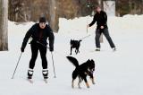 Skijoring in Assiniboine Park...Winnipeg