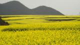 雲南元陽羅平Scenic Yunnan