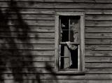 Window & Wood