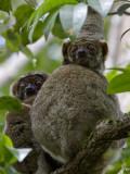 Madagascar, the forgotten Island