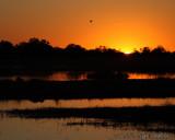 Moremi waterhole sunset