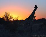 Sunset at Savute 2