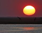 Sunset at Chobe River