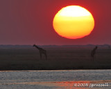 Sunset at the Chobe River 1