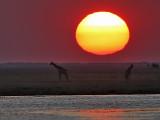 Sunset at Chobe River 2