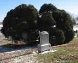 McCallen Grave