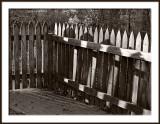 Morning Fence