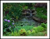 Rainy Day Pond