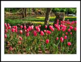 Reedy Fork Foundation/Garden