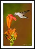 Sweet nectar!