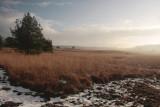 Soerense veld