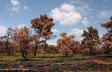 Na de brand - After the bushfire