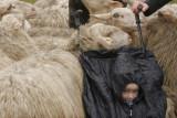Lammetjesdag - Loenermark