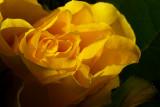 Sunshine & Flower(s)